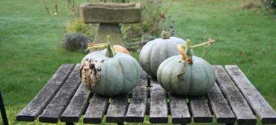b_400_300_16777215_00_images_pumpkins.jpg